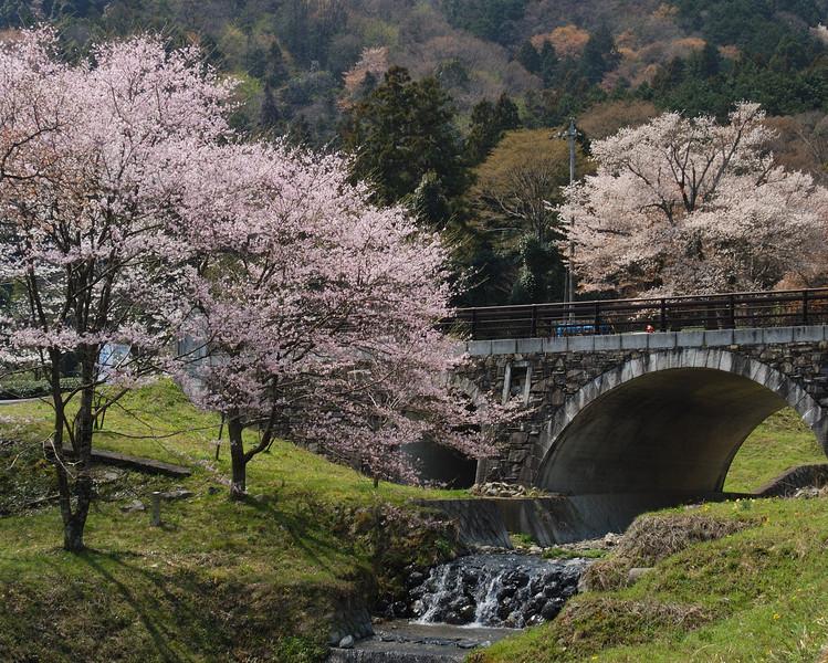 霞間ヶ渓公園 桜