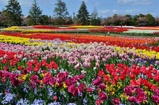 なばなの里 里の湯 お花畑の写真