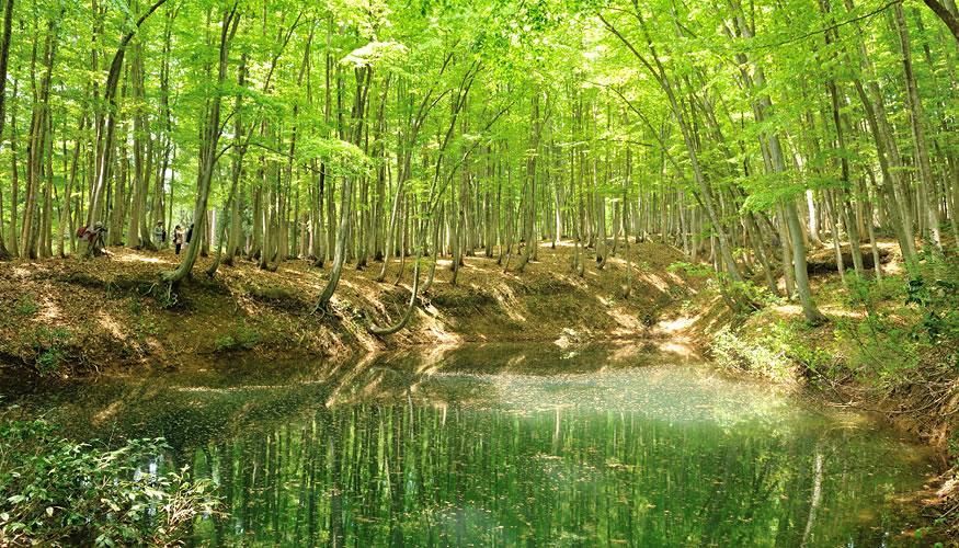新潟 ひなの宿 ちとせ 美人林の写真