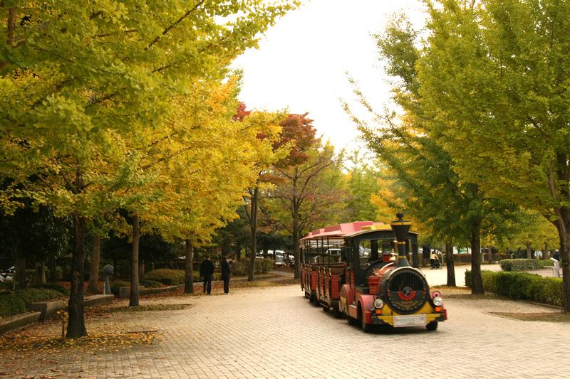 埼玉県 秩父ミューズパーク スカイロードの写真