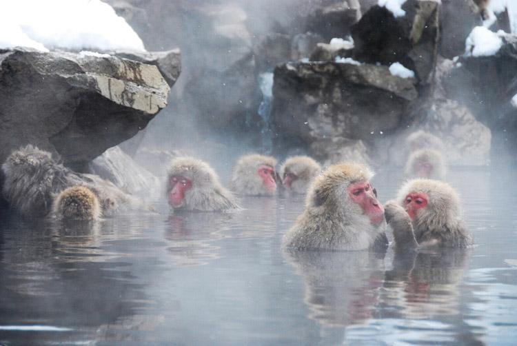 地獄谷野猿公苑 ニホンザル