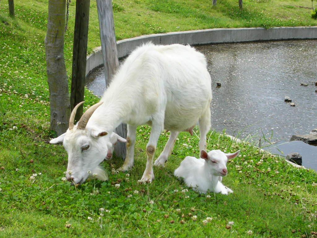 熊本 蘇山郷 牧場の写真