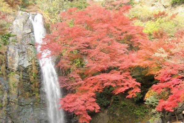 大阪 みのお山荘 風の杜 自然の写真