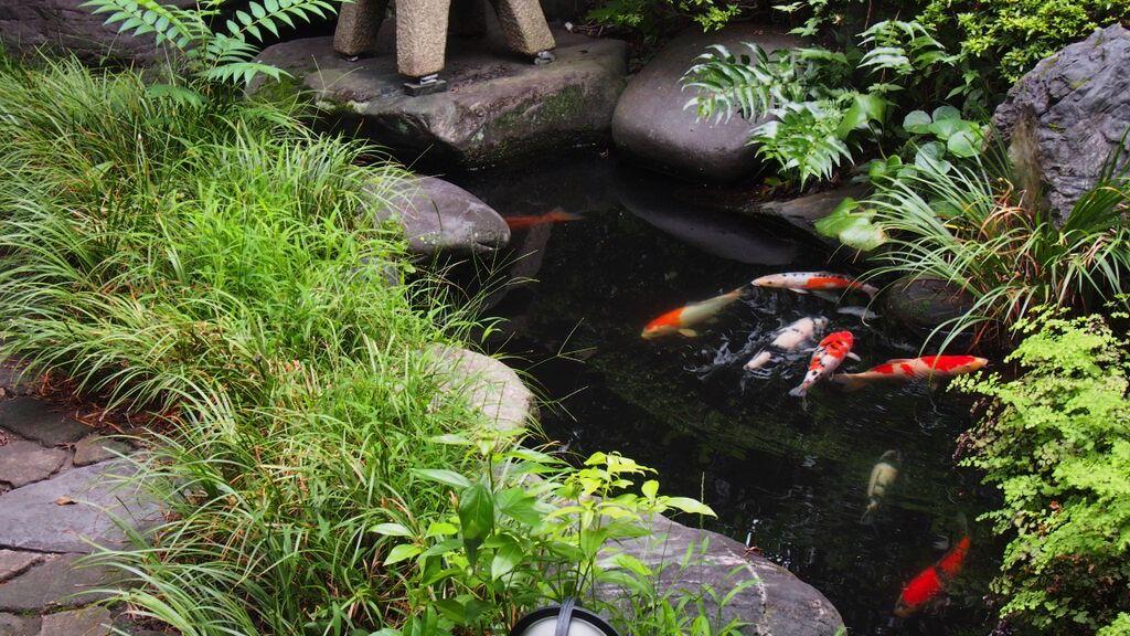 鴎外温泉-津和野の鯉