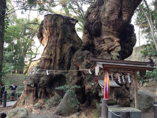 静岡 熱海温泉湯宿みかんの木 大楠の写真