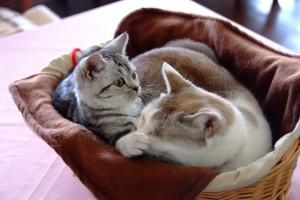 看板猫「ほたる」&「キャンディ」伊豆高原 プチホテル フロマージュ