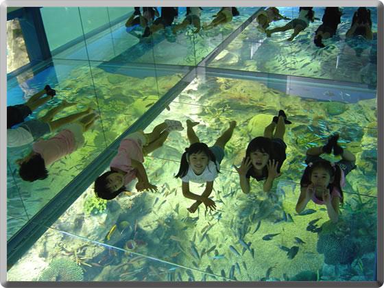福井 清風荘 水族館の写真