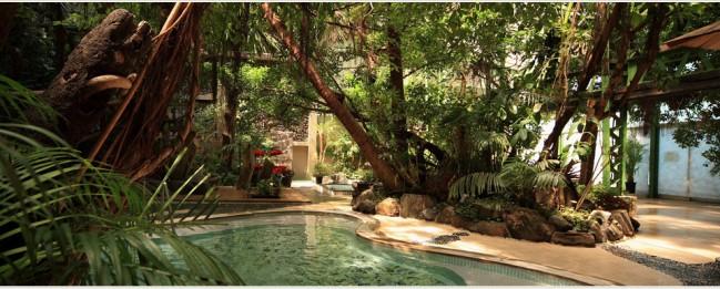 熱帯雨林さながらのジャングル風呂が人気