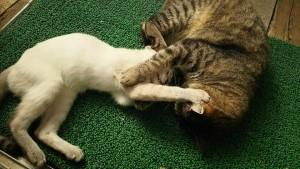 看板猫たち 湯布院 猫ちゃんおもてなしの宿 オーベルゼ レ・ボー