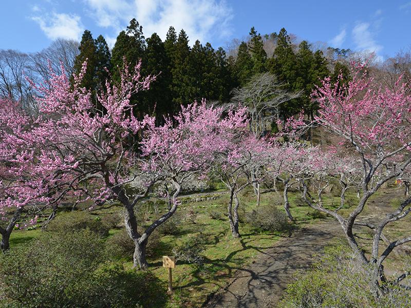 仙台 天守閣自然公園 自然庭園の写真