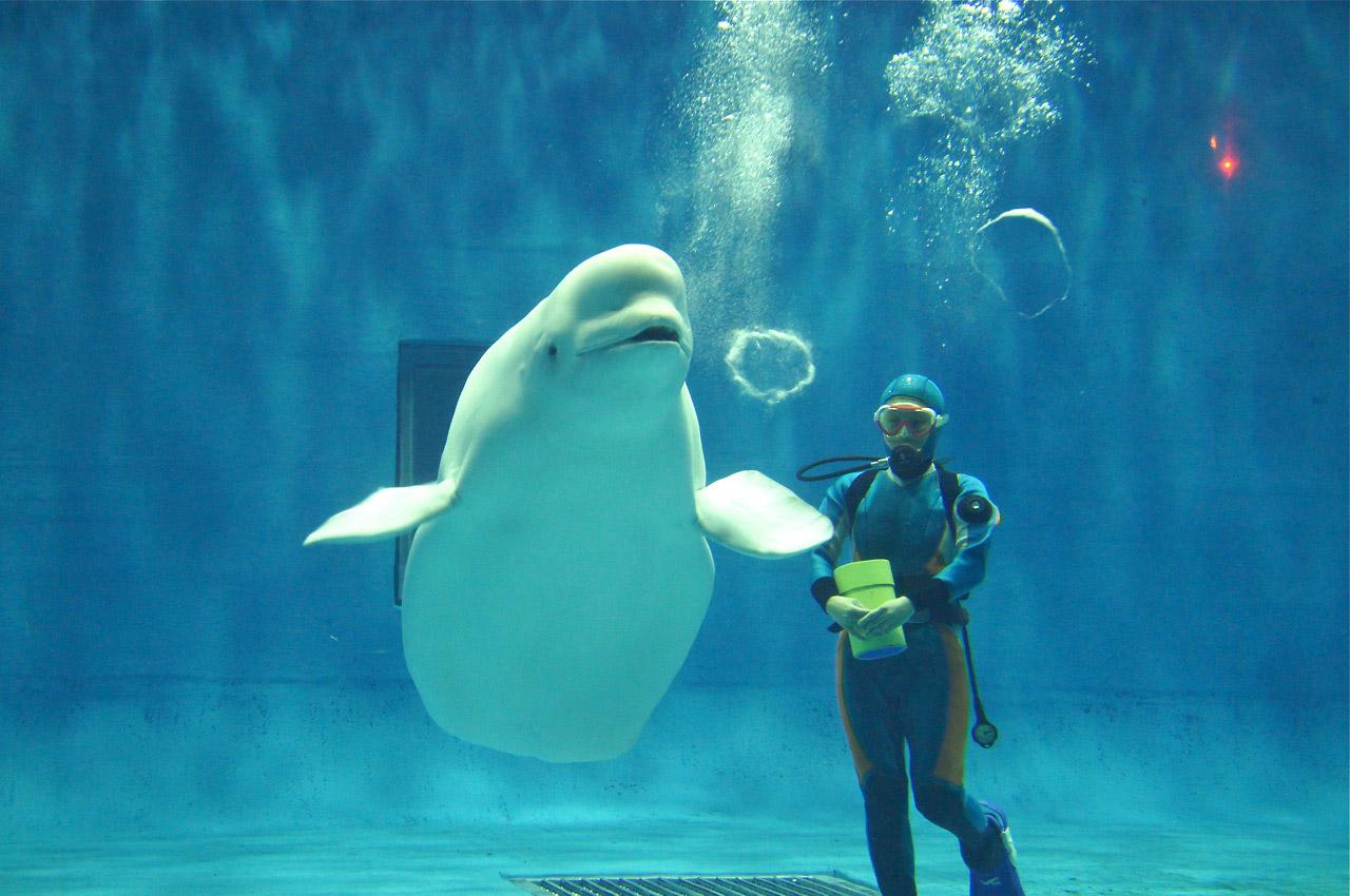 島根 美又温泉国民保養センター しまね海洋館アクアスの写真