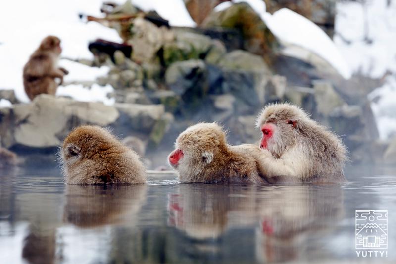 寒さをしのぐために温泉に入る猿の写真