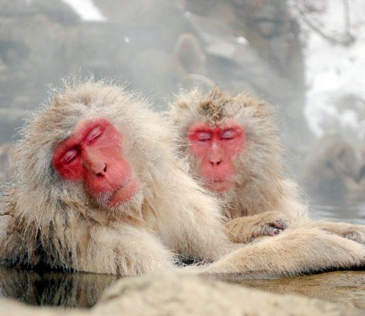 猿の温泉の写真