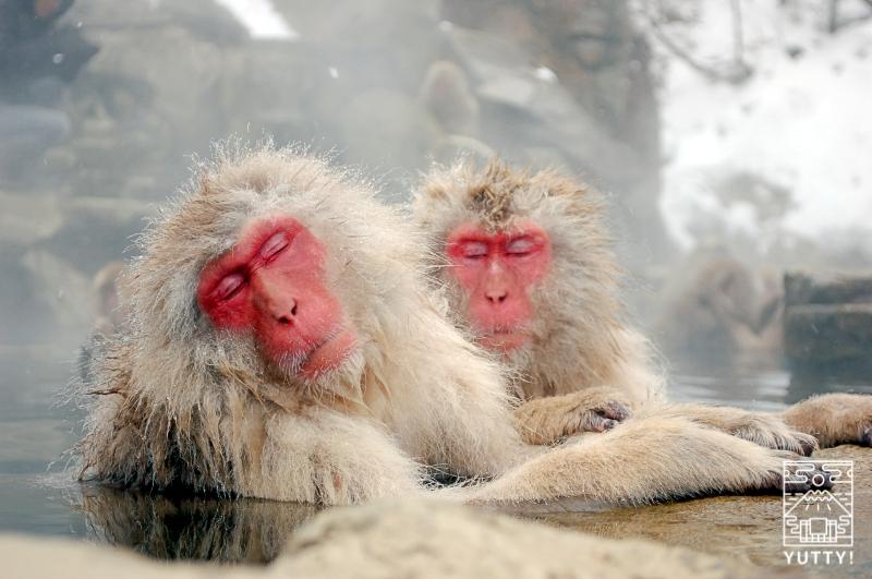 温泉でくつろぐ猿の写真