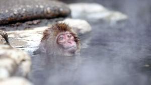 子 猿 温泉