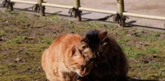 有馬温泉の猫の写真