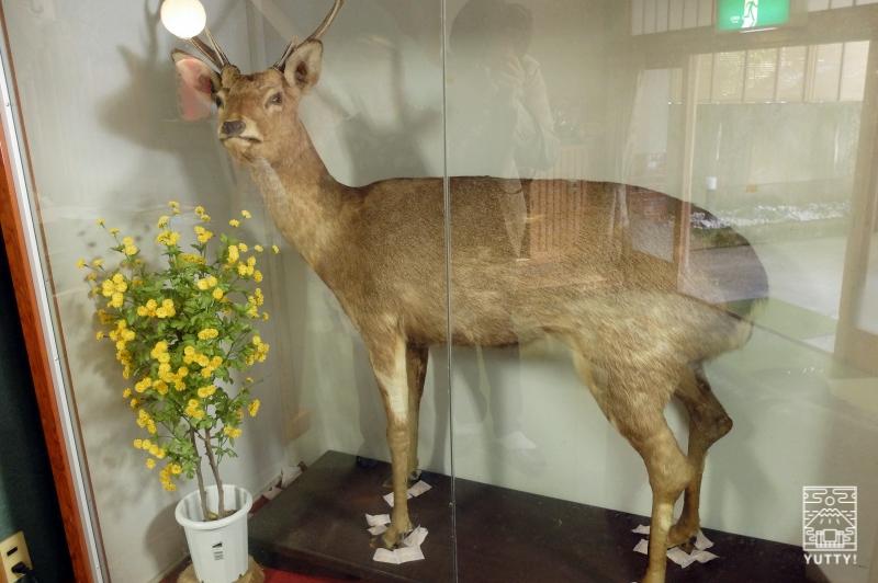 梅ヶ島温泉【湯の宿いちかわ】の鹿のはく製の写真