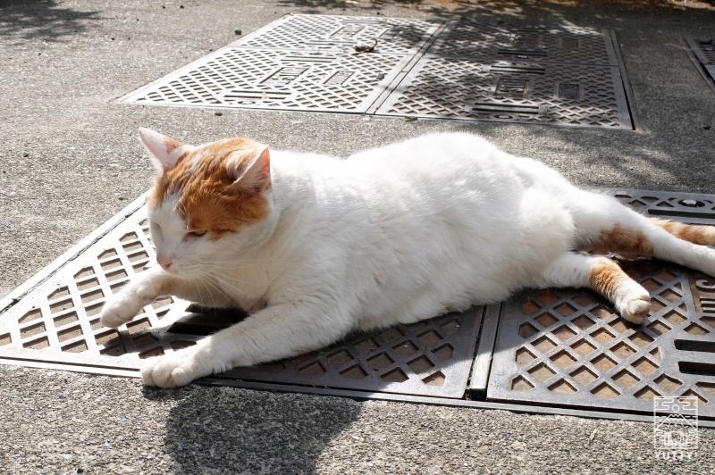 梅ヶ島温泉【湯の宿いちかわ】の看板猫の写真