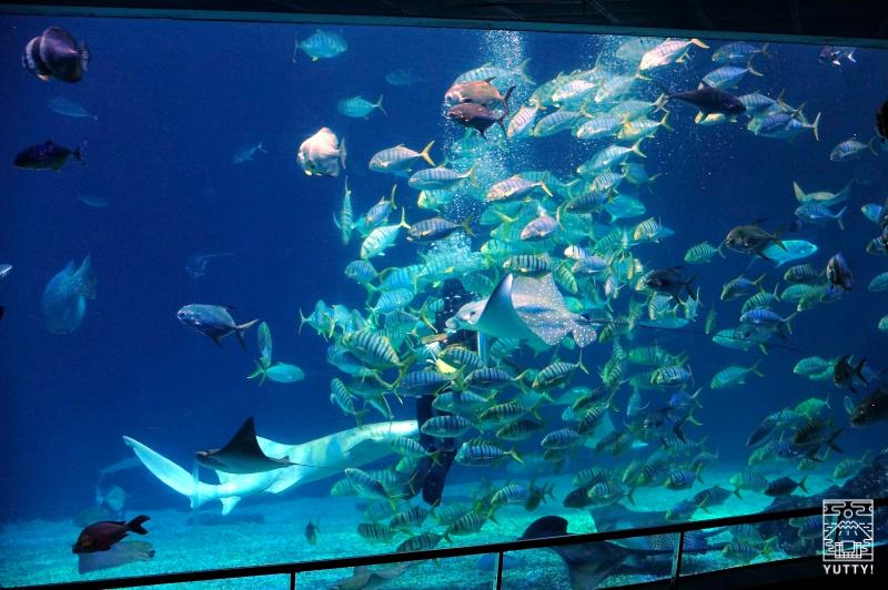国立海洋生物博物館の水槽の中で泳ぐ魚達の写真