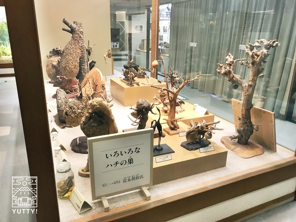 望岳荘ハチ博物館の展示物