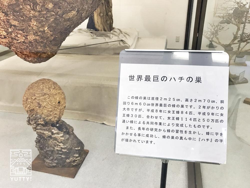 望岳荘ハチ博物館の世界最大の蜂の巣2