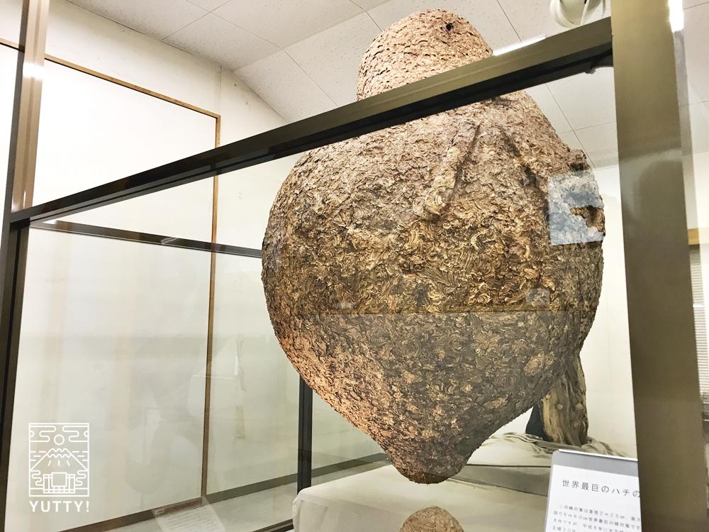 望岳荘ハチ博物館の世界最大の蜂の巣1