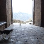 チヴィタにいる猫の写真